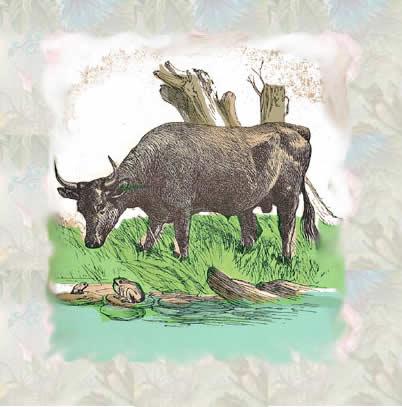 A rã e o touro